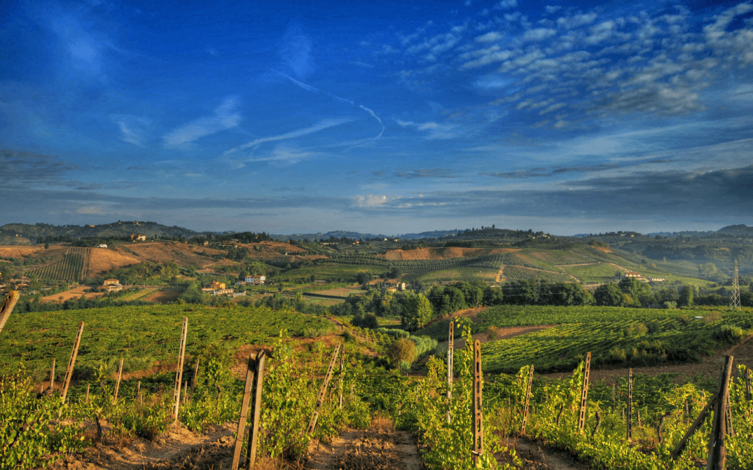 Tuscany Guide for Wine Lovers